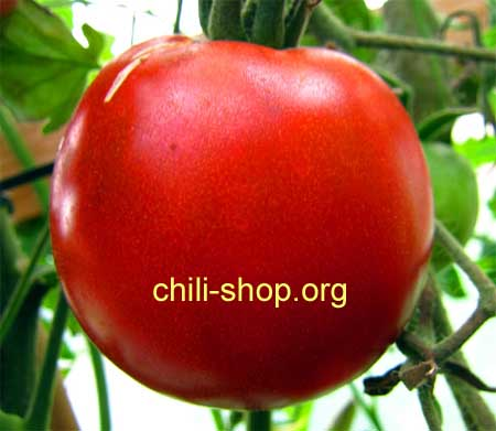 tomate rot creme brulee blaue tomaten samen kaufen. Black Bedroom Furniture Sets. Home Design Ideas
